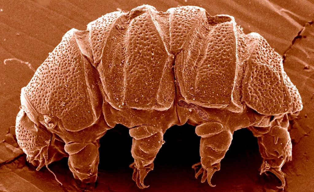 tardigrade02.jpg